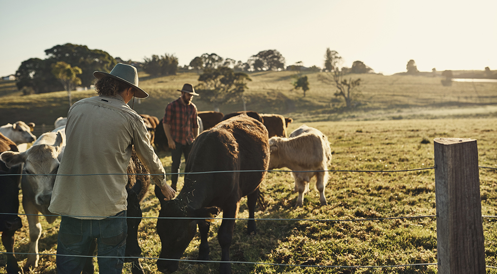 Pastoral Lands Board welcomes highly anticipated industry reforms